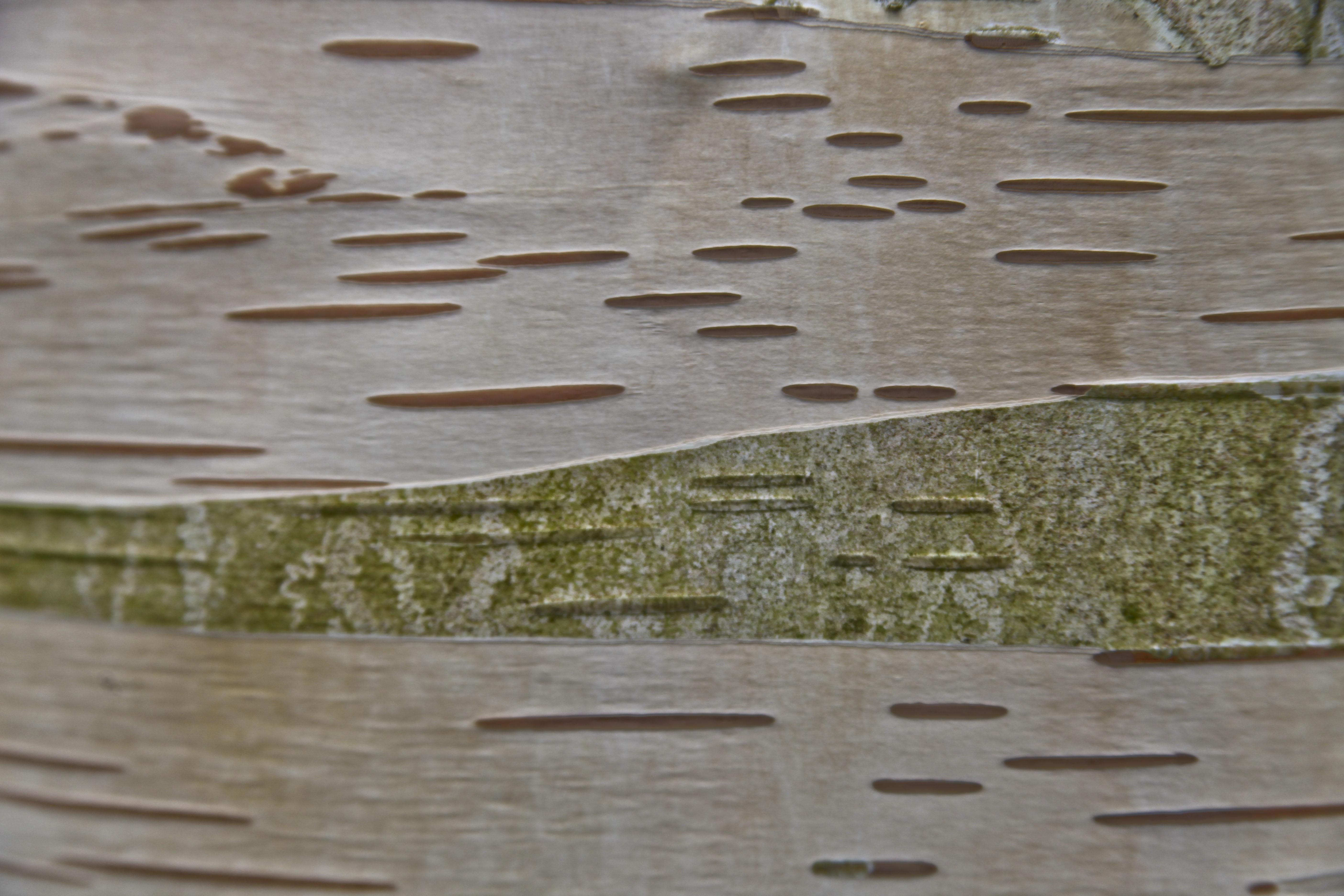 l'écorce dont sont faits les arbres… | botanique jardins paysages