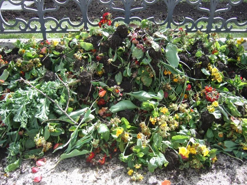 Stop aux fleurs jetables dans les villes !