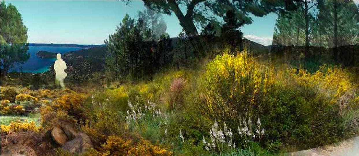 A propos du calycotome de la frutic e botanique for A propos du jardin