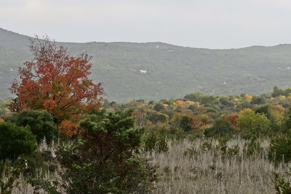 #garrigue #automne #érable #veroniquemure