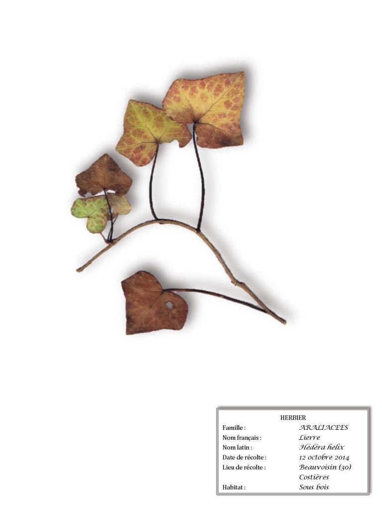 herbier olivette2_Page_01