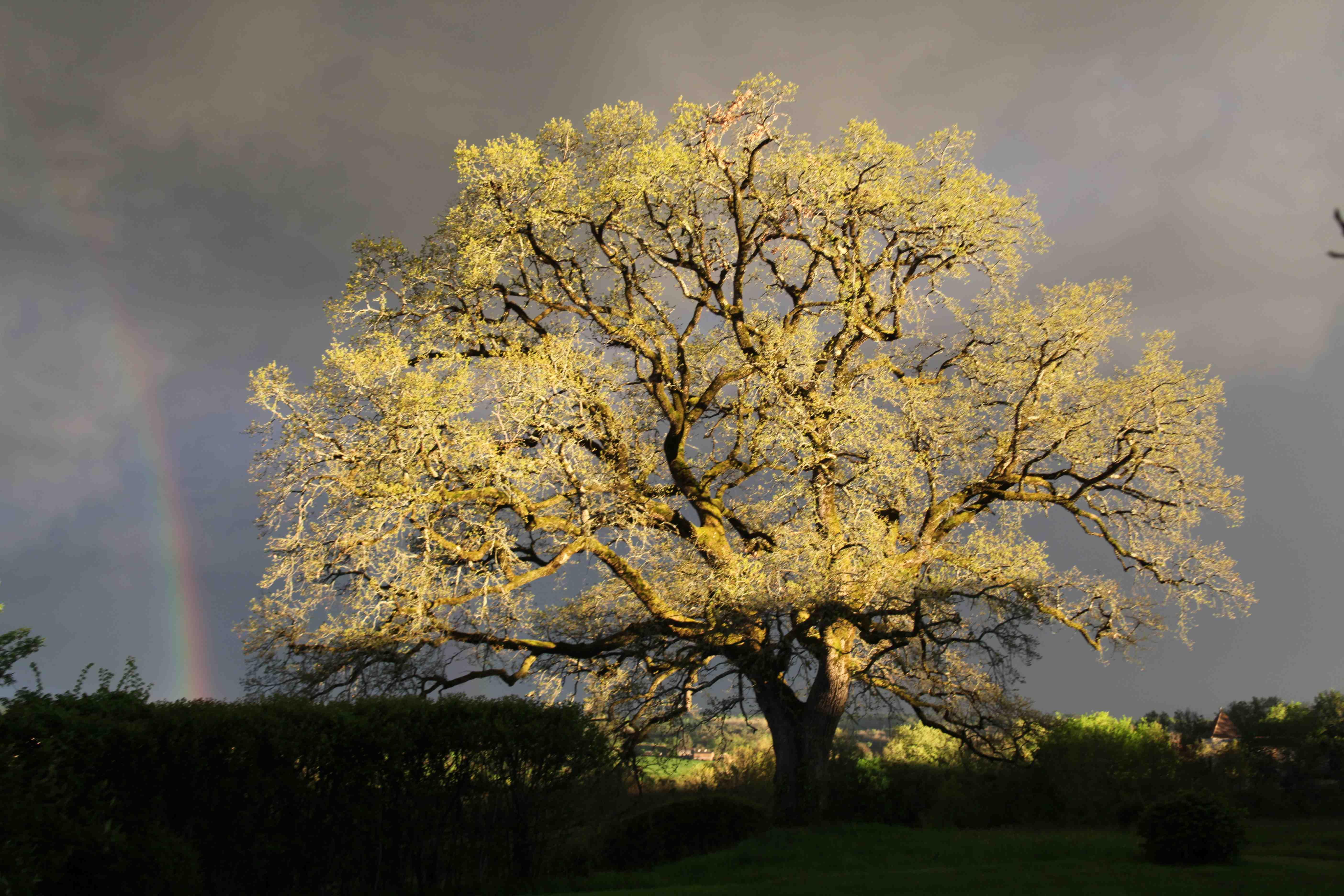 Les arbres de Jacques Prévert