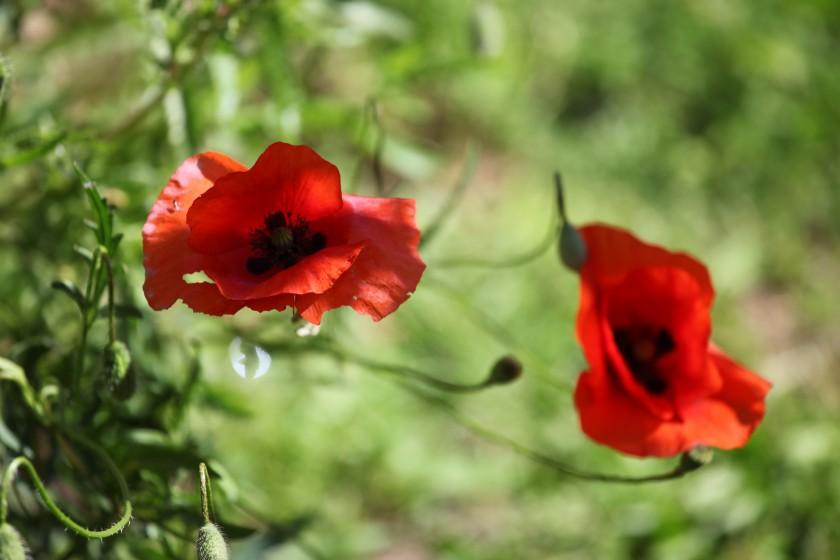 Plantes en temps de guerre