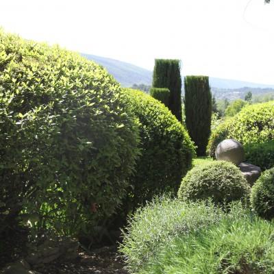 le tamaris gacholo de camargue botanique jardins paysages. Black Bedroom Furniture Sets. Home Design Ideas