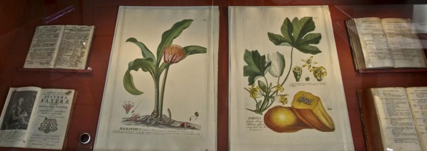 Quand Georges Sand explique la botanique à sa fille…