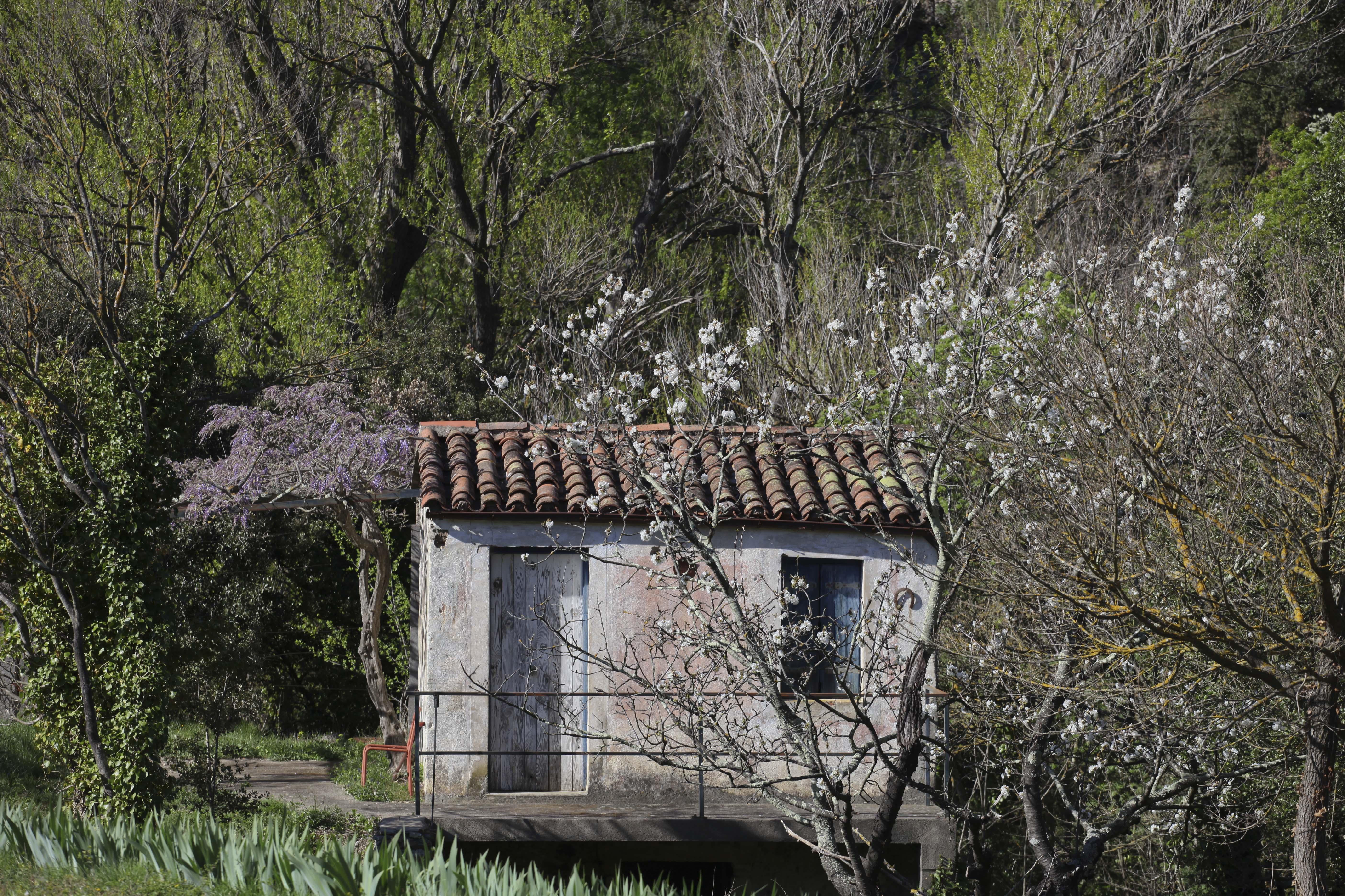 Le jardin dormait encore botanique jardins paysages for Le jardin neufchatel sur aisne
