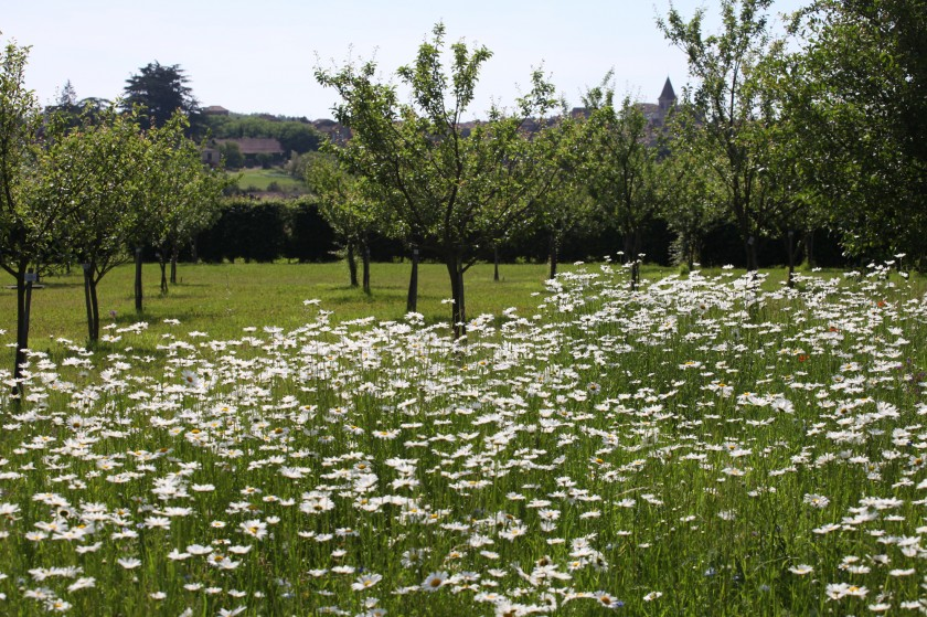 Un verger-jardin, dédié à la biodiversité