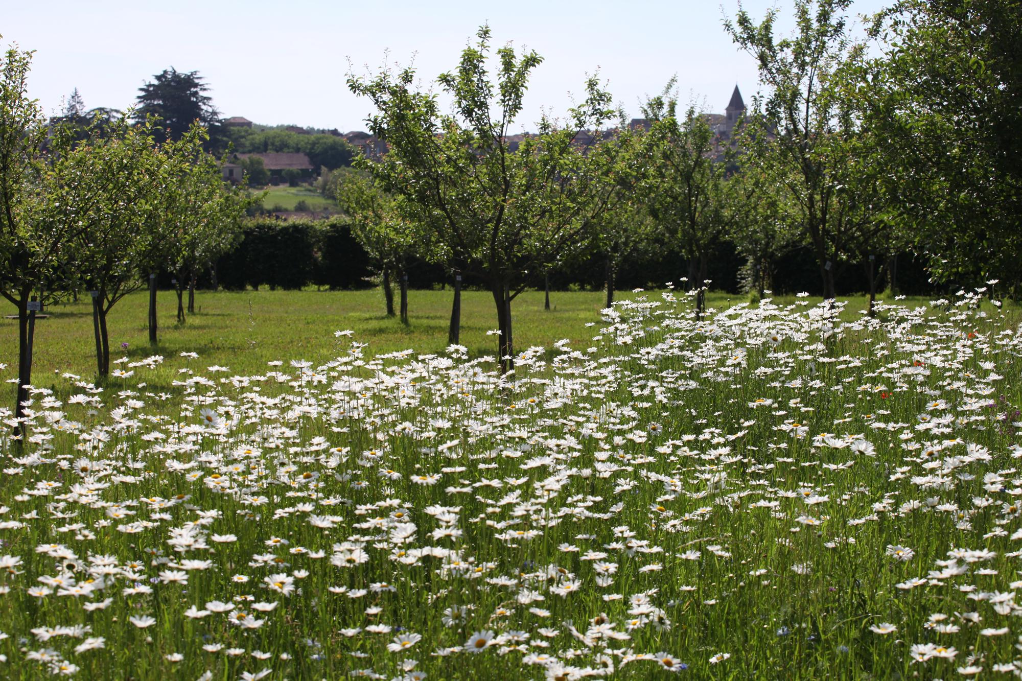 Un Verger Jardin Dédié à La Biodiversité Botanique