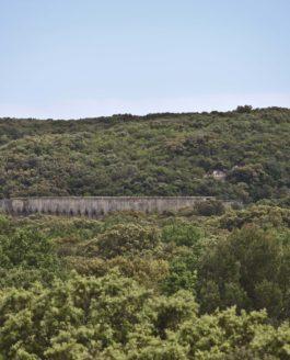Testez vos connaissances sur la forêt méditerranéenne!