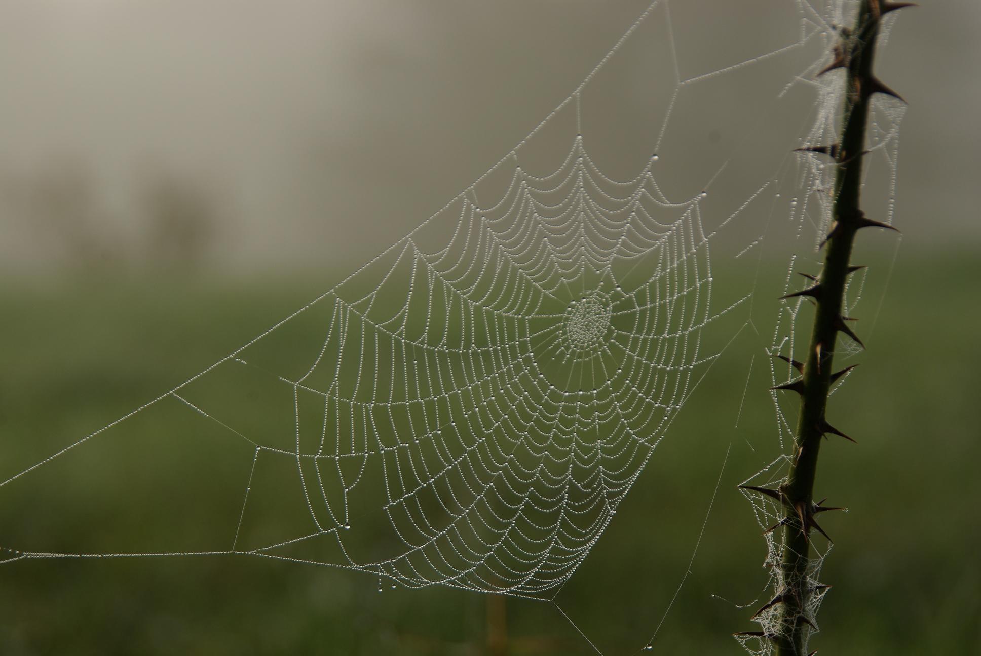 Araignée du matin….