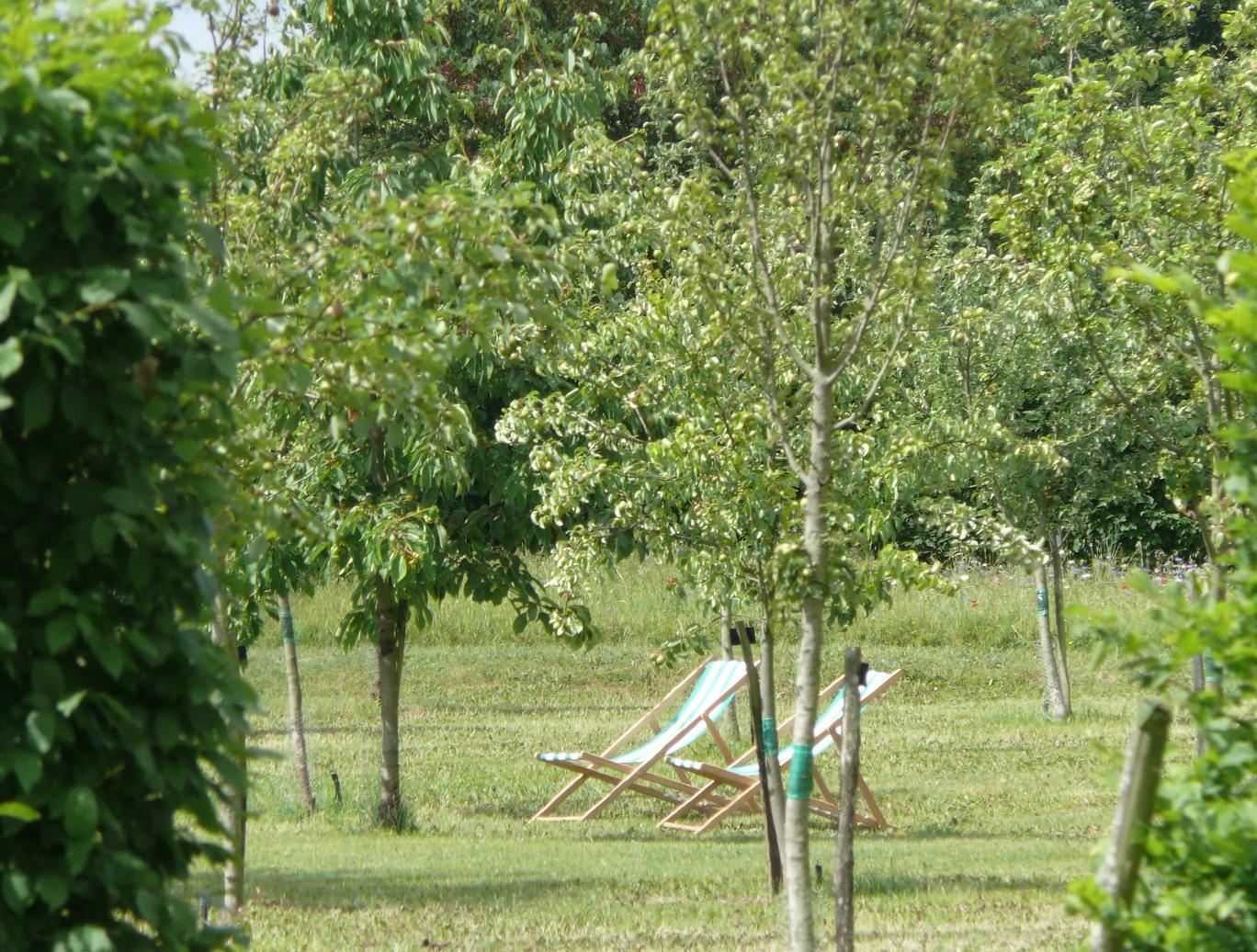Et si nous arrêtions de vouloir des jardins «propres» ?