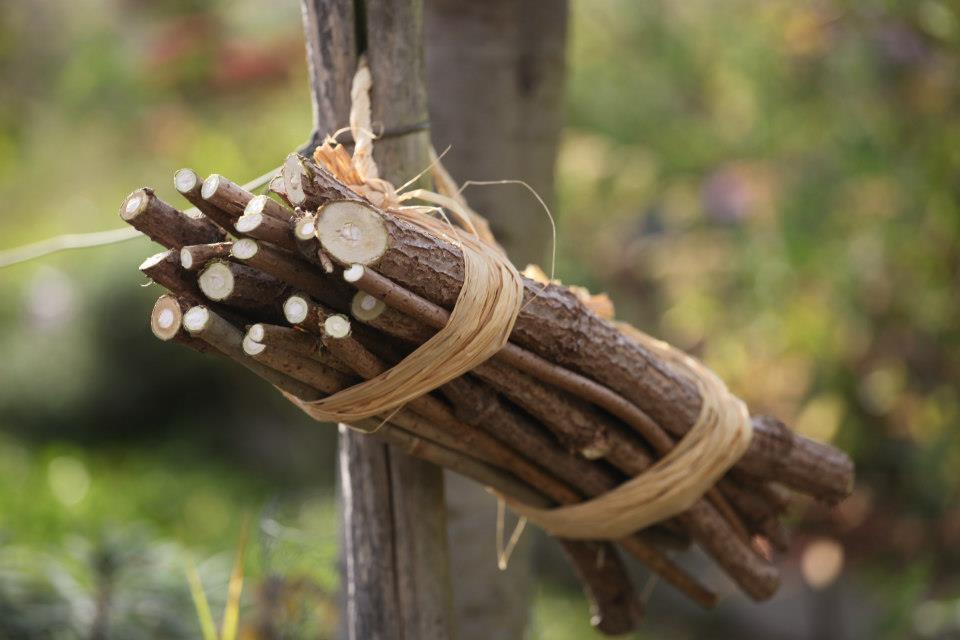 C'est la semaine sans pesticide : 5 conseils pour jardiner bio