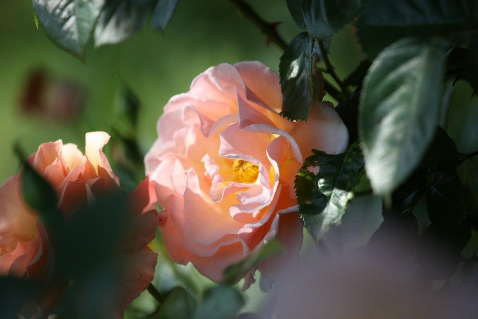 Balade olfactive dans les jardins de la Bigotie, de la sensation au sentiment…