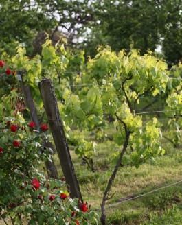 Chaud juillet sur frais juin, peu de blé mais bon vin.