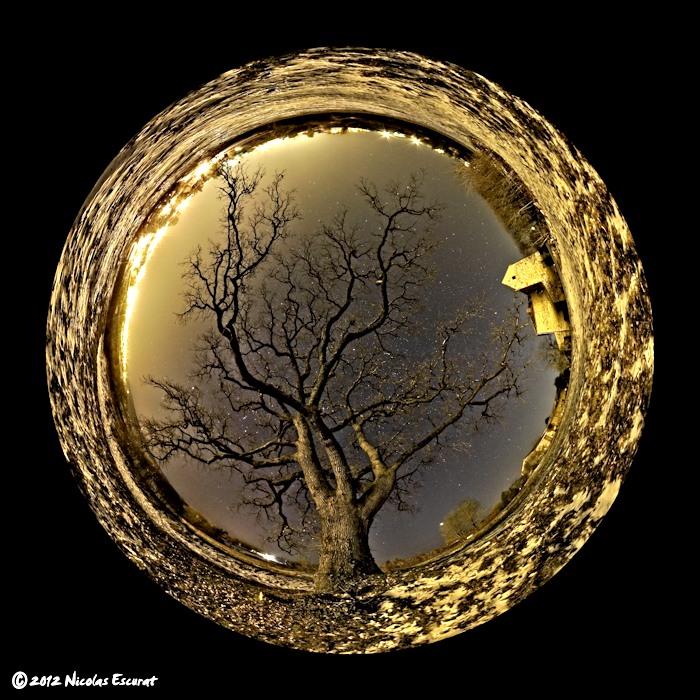 Le chêne de la Bigotie comme si vous y étiez… En 360° !