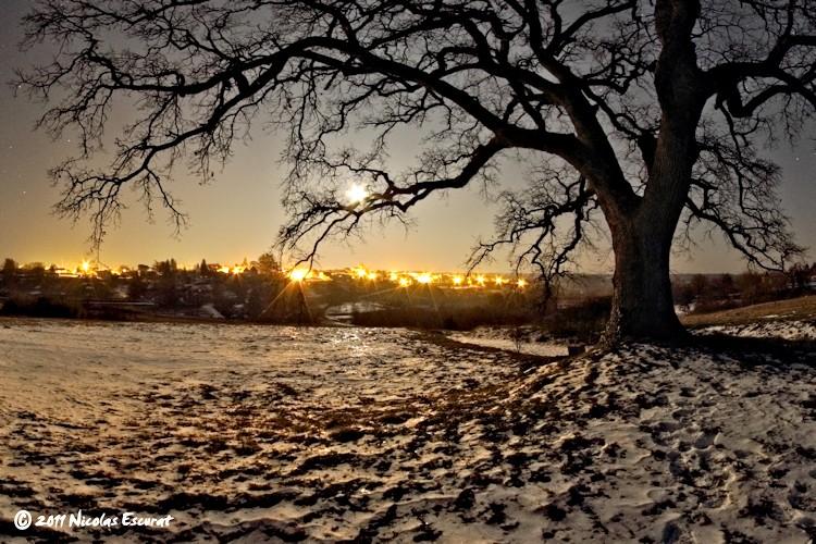 Le grand chêne de la Bigotie au coeur de la nuit…