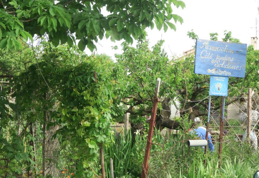 Du côté des jardins solidaires