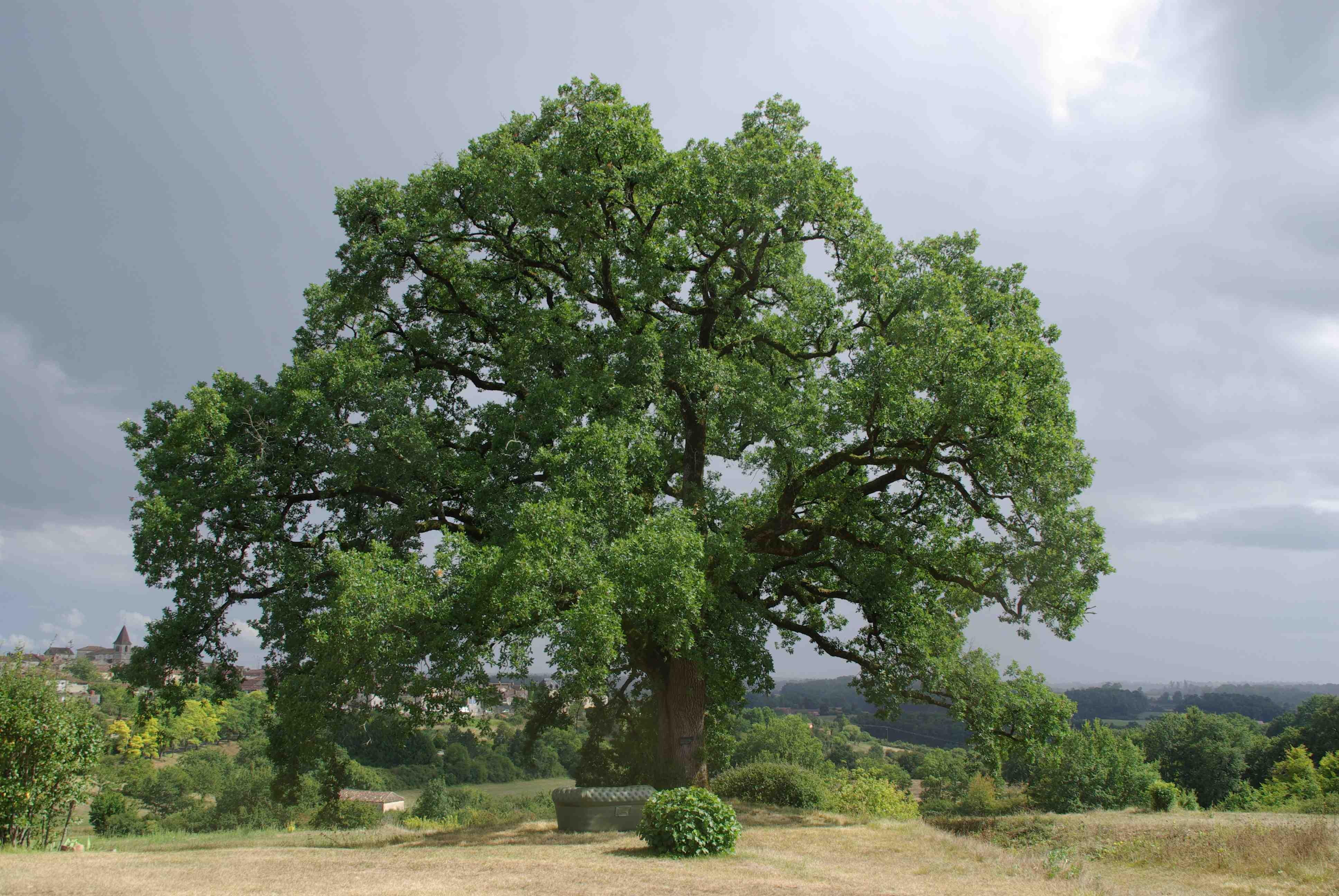 Parfois, un arbre humanise mieux un paysage que ne le ferait un homme. Gilbert Cesbron