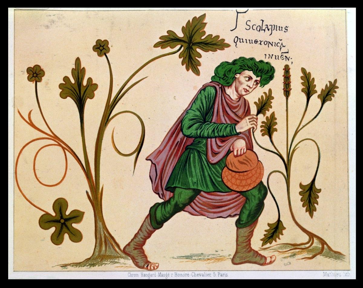 Les herbes de la Saint Jean