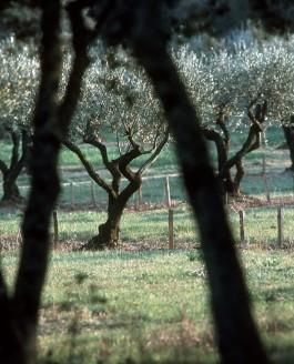 Réconcilier l'arbre et le champ… Tous nos espoirs dans l'agroforesterie !