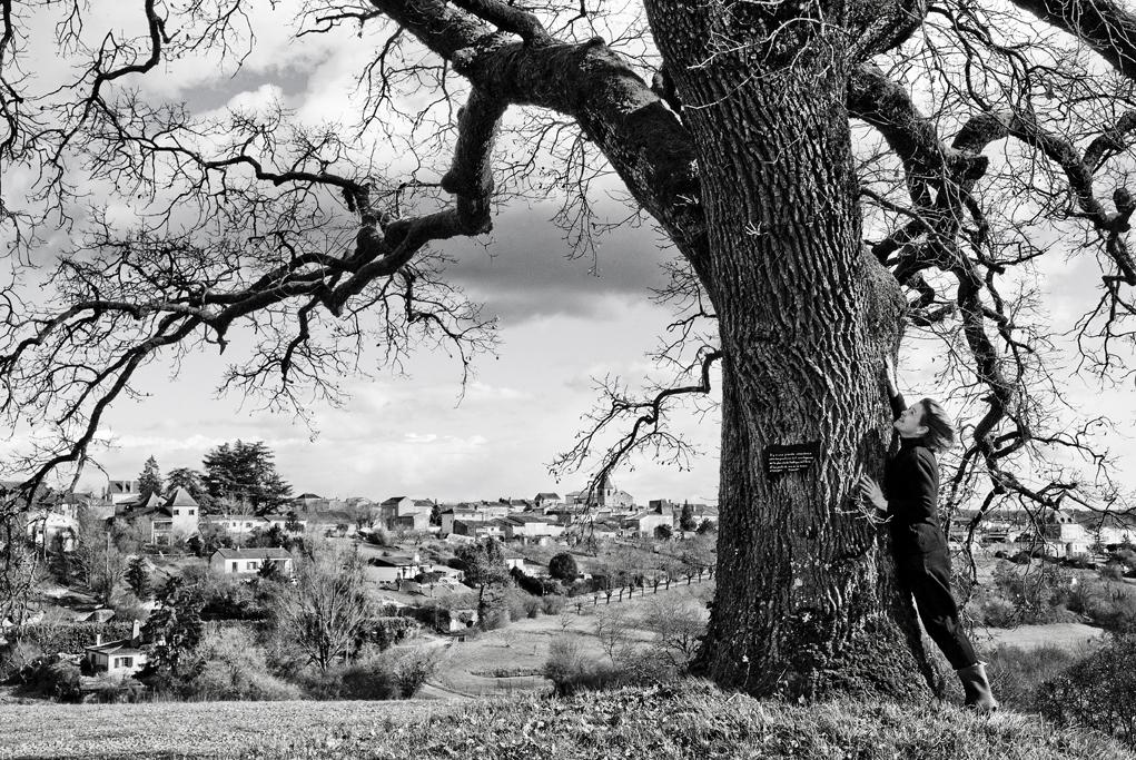 Plaidoyer pour les arbres.