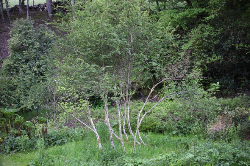 Une famille d'arbres…