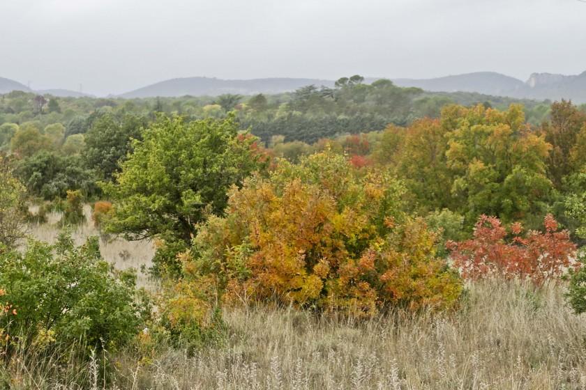 Paysages d'automne en garrigue…