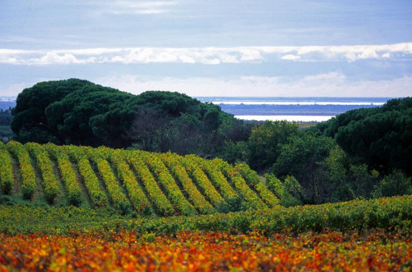 Les Costières, entre vigne et ciel, par Jacques Maigne.