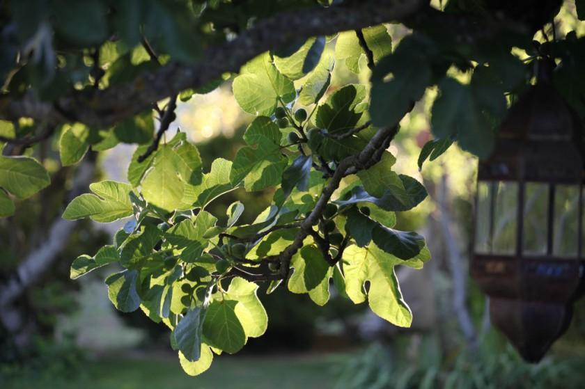 Août mûrit les fruits, septembre les cueille.