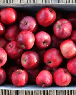 Ces pommes qui nous sont si familières