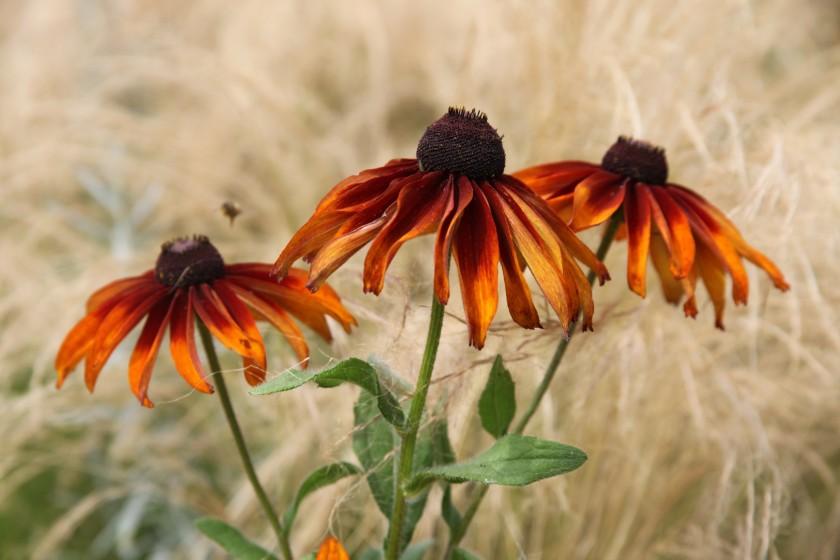 Le paysagiste, le jardinier et le botaniste.