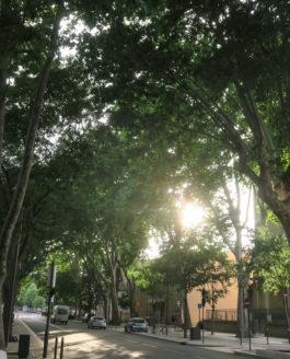 Repenser les conditions d'accueil des arbres dans la ville de demain