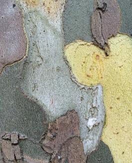L'écorce dont sont faits les arbres…