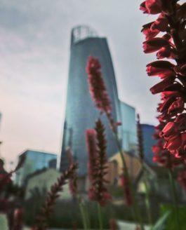 Qualifier le potentiel de biodiversité d'un projet d'aménagement urbain