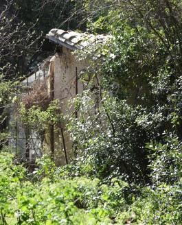 Les feuilles et les branches – Foliis ac frondibus