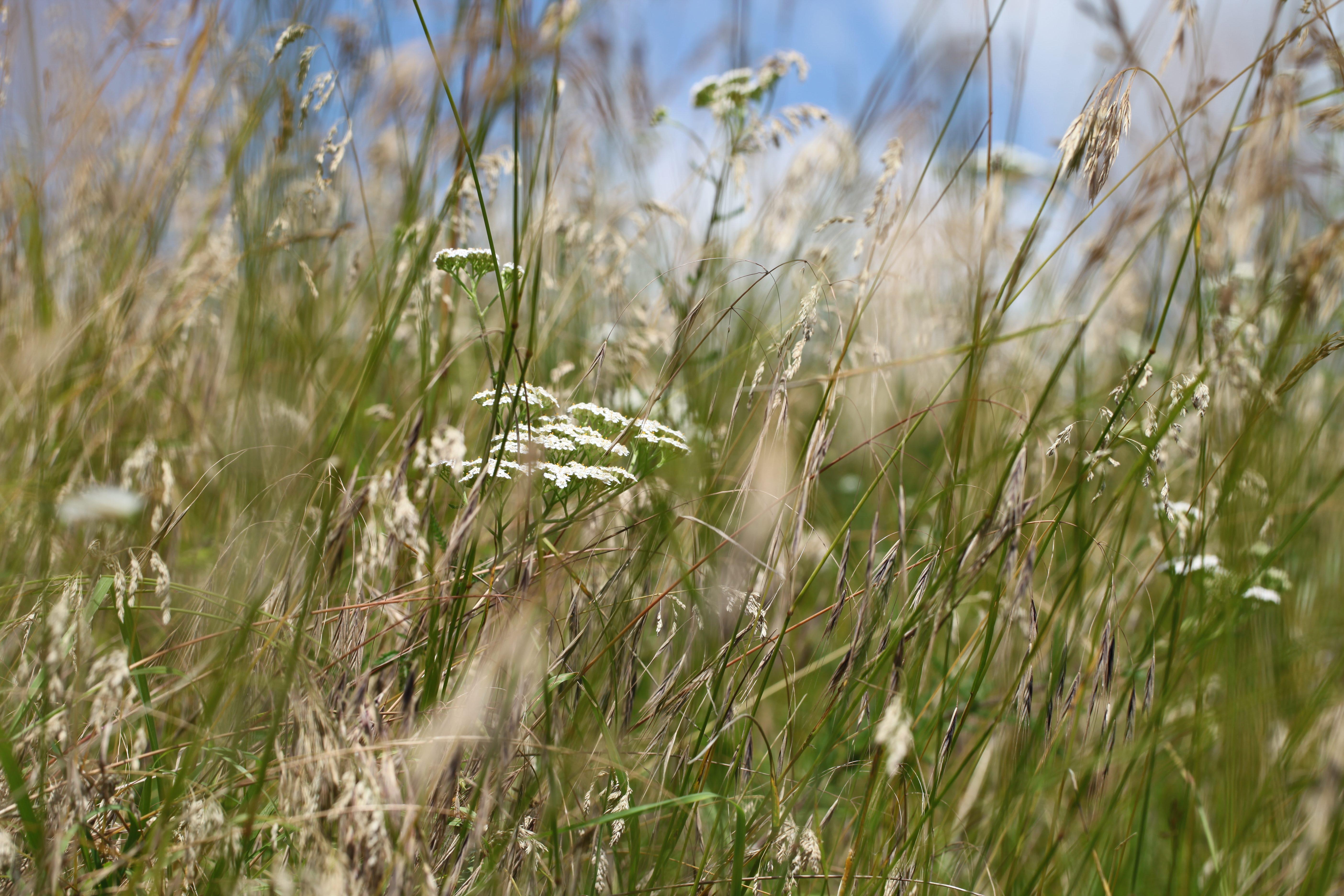 Des nouvelles des prairies fleuries de la Bigotie.