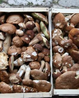 C'est la saison des champignons…
