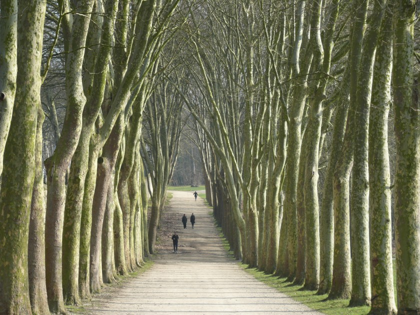 Dire et redire l'histoire des alignements d'arbres en France….
