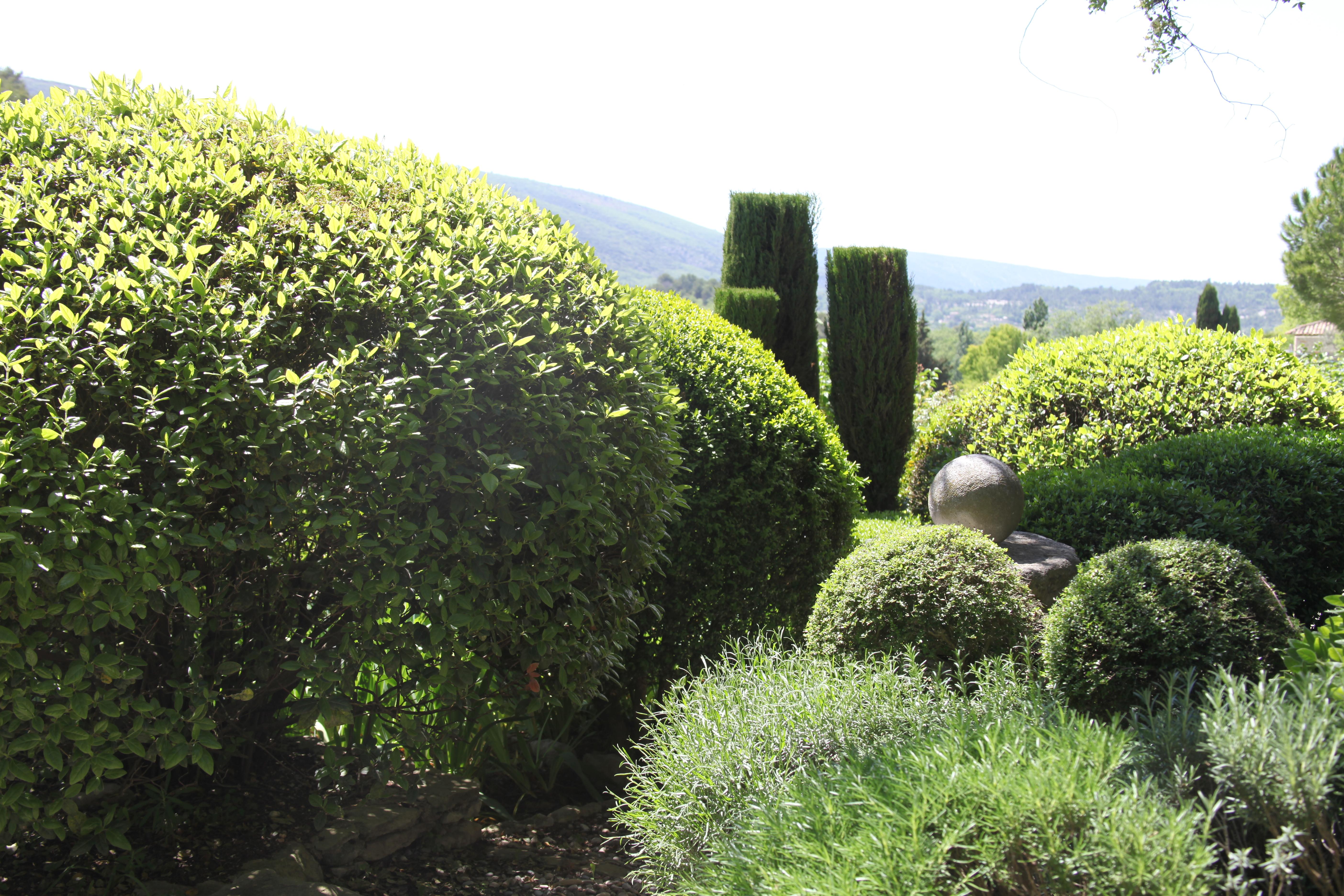 Planter Une Bordure De Buis mes alternatives au buis | botanique jardins paysages