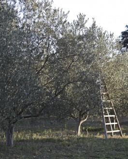 Morceaux choisis de l'herbier de l'olivette