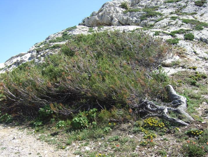 La branche d'arbre sait bien ce que dit le vent de mars…