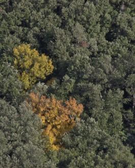 Pourquoi un Parc Naturel Régional des Garrigues ? par Bertrand Folléa, paysagiste-urbaniste, Grand prix du paysage 2016.