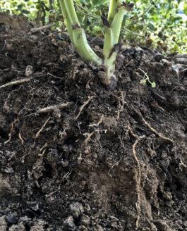 Jardiner les racines