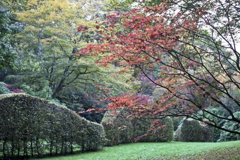 L'arboretum de la Sedelle  en couleur